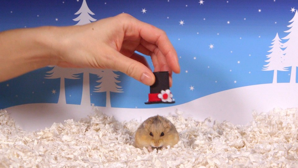 Cute Hamsters: 12 Days of Christmas – Bloopers