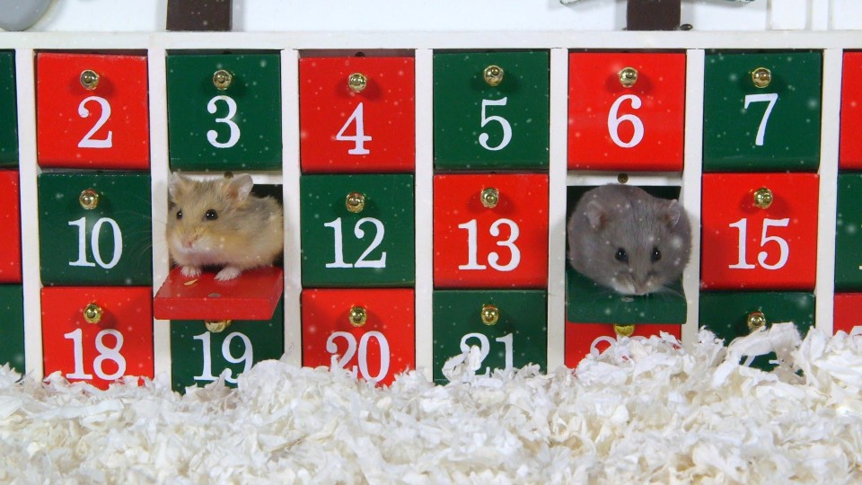 Day 1: Advent Calendar – Cute Hamsters: 12 Days of Christmas