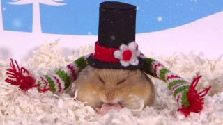 Day 11: Christmas Hats – Cute Hamsters: 12 Days of Christmas