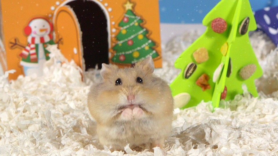 Day 2: O Christmas Tree – Cute Hamsters: 12 Days of Christmas