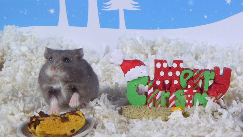 Day 3: Christmas Treats – Cute Hamsters: 12 Days of Christmas