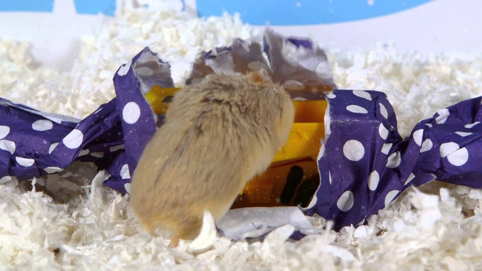 Day 4: A Present for Dumptruck – Cute Hamsters: 12 Days of Christmas