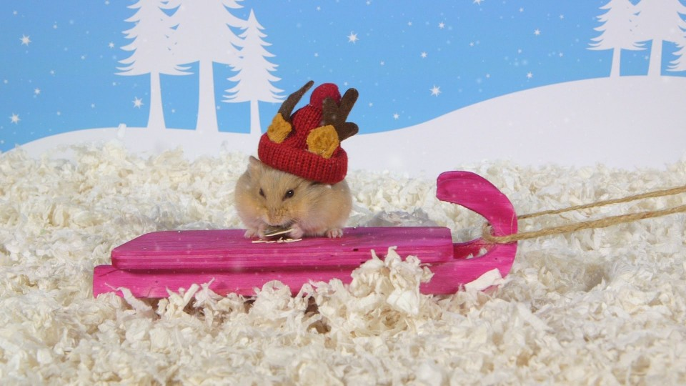 Day 7: Tobogganing – Cute Hamsters: 12 Days of Christmas
