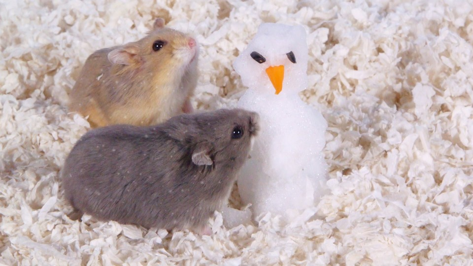 Day 9: Building a Snowman – Cute Hamsters: 12 Days of Christmas