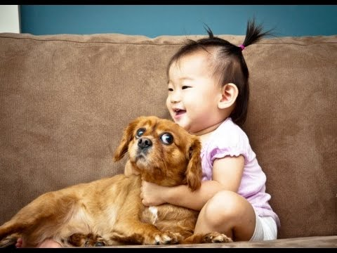 Funny Babies Annoying Cats and Dogs Compilation 2014 [NEW HD]