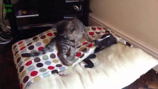 Funny Cats Annoying Dogs Compilation 2014 [NEW HD]
