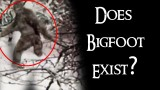 BIGFOOT Strolls through a Russian Forest! Do you think Bigfoot EXIST?