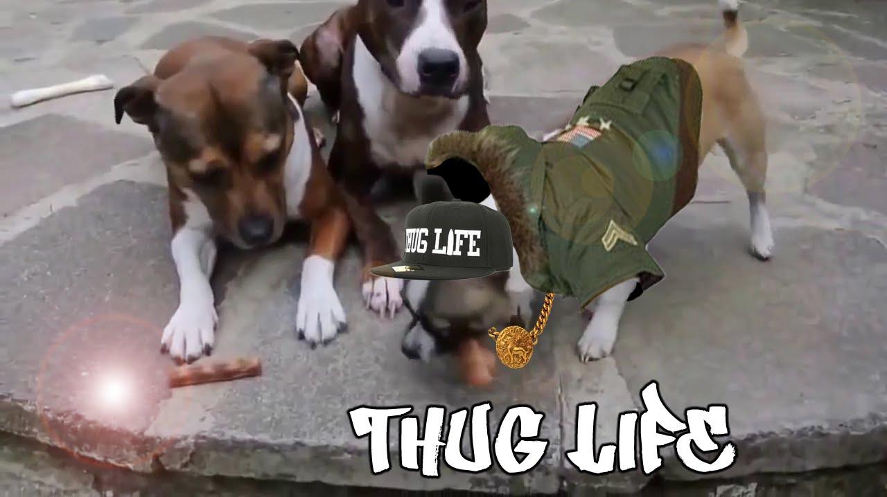 Thug Life Dog Related Keywords & Suggestions - Thug Life ...