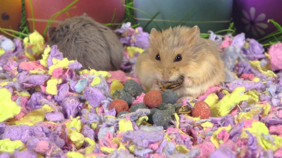 A Cute Hamsters Easter
