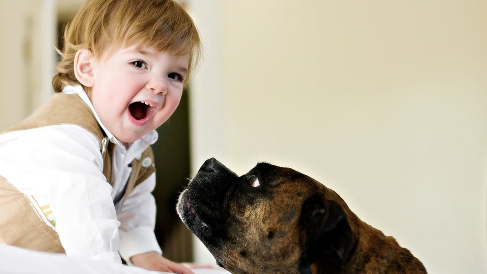Babies Laughing Hysterically at Dogs Compilation 2015 [NEW HD]