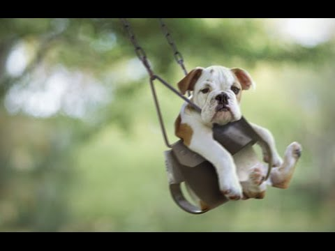 Cute Dogs in Swings Compilation 2015 [NEW HD]