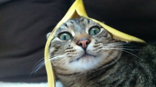 Funny Cats vs Bananas Compilation 2015 [NEW HD]