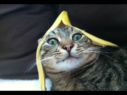 Funny Cats vs Bananas Compilation 2015 [NEW HD]